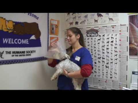 Care After Surgery-Spay/Neuter Clinic.wmv