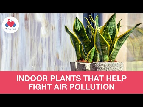 Reducing Indoor Air Pollution With House Plants