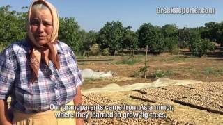 Taxiarxhis: Greece's Fig Village