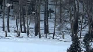 Wolfsrudel - Rivalen der Wildnis