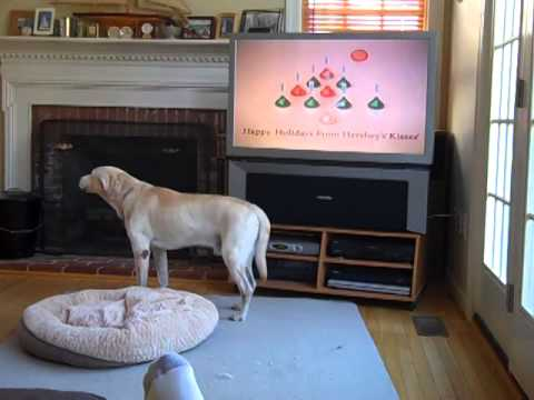 Jake singing to Hershey Kiss Christmas commercial - YouTube