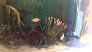 aqua one 850 aquarium at shire swim school with convict cic