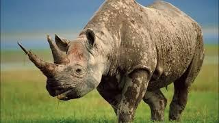 Загадки про животных, которые живут в Африке