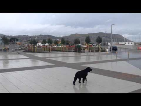 Greystones Harbour's New Public Square 1st Apr 2016