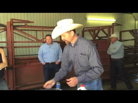 Beef Hormone Implants: in a Cattleman's Own Words