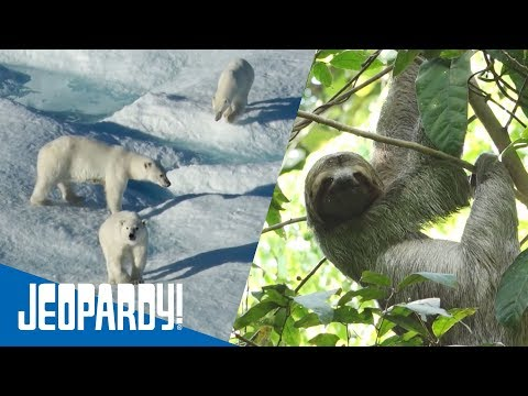 Exotic Wildlife | JEOPARDY!