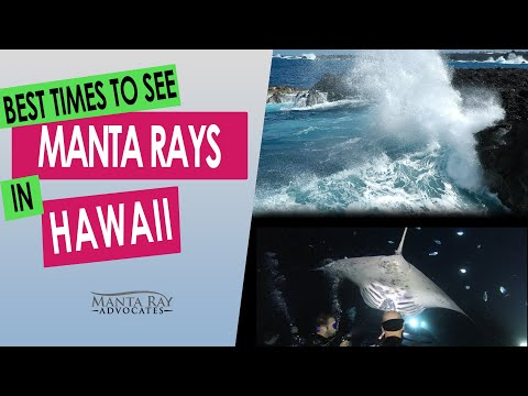 best-travel-times-to-see-manta-rays-in-kailua-kona,-hawaii
