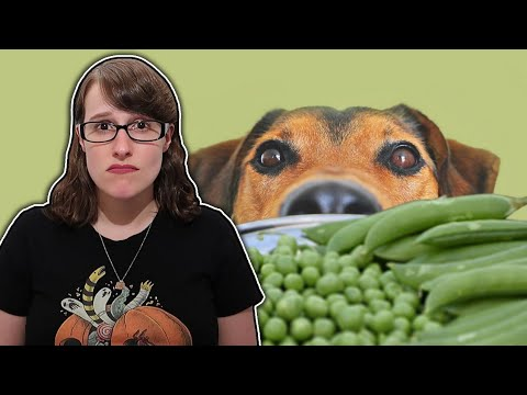 Vegan & Grain-Free Dog Food Might Be Deadly?