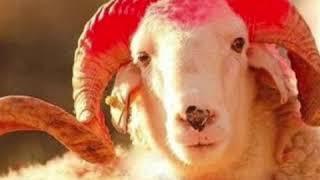 Qurban bayramina aid video