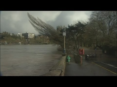 UK Storms on Wild Wednesday: Interview interrupted by tree falling into a river