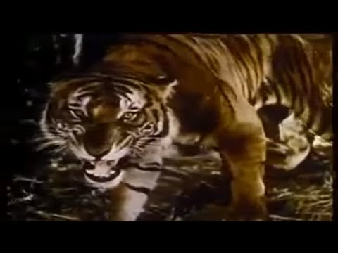 Jungle Book (Full Length CLASSIC MOVIE FOR KIDS, Entire Feature Film, English full movies for free