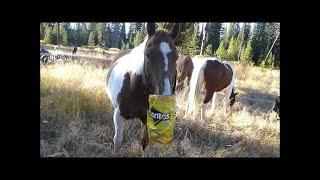 Girl eats like a horse