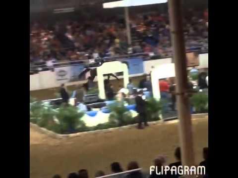 Arabian Horses - Radio Hardcore