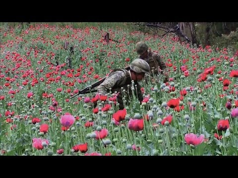 This Week on Americas Now: Poppy fields