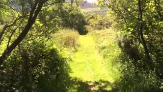 Nature walk at Bryn Gloch caravan and camping park
