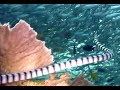 Watch-out  Deadly Sea Snake in Moalboal