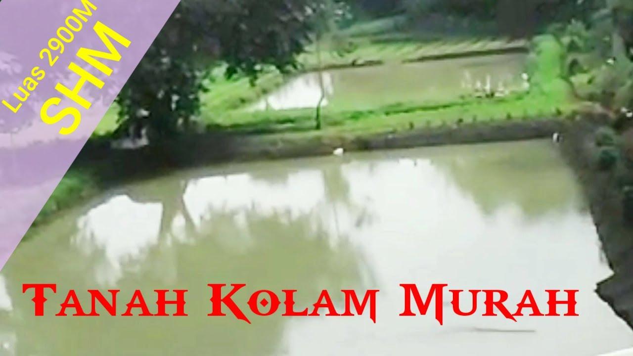 Jual Tanah Murah di Ciampea Bogor - YouTube