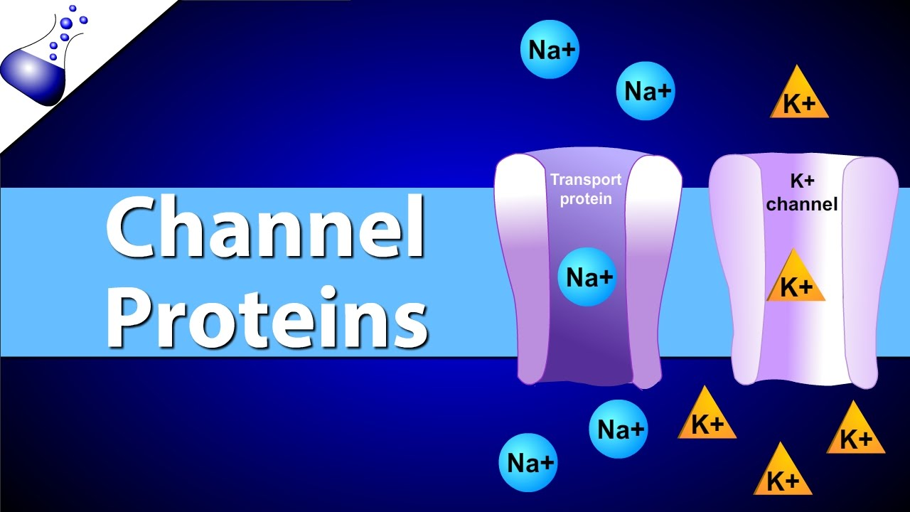 Channel Proteins - YouTube