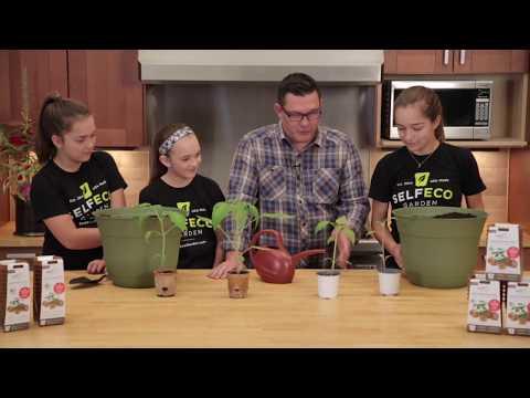 SelfEco Garden Transplanting Comparison: Compostable Garden Pot vs. Petroleum Based Pot