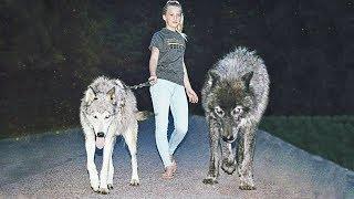 Эти животные признаны лучшими охранниками в мире