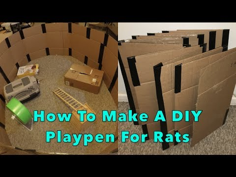 How To Make A DIY Cardboard Playpen For Rats (Foldable)