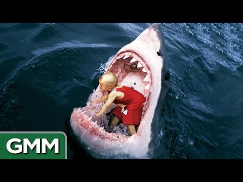 6-strangest-things-swallowed-by-a-shark