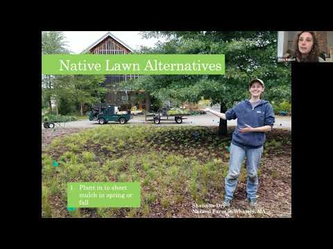 Lunch & Learn: Diversify Your Lawn || Converting Your Lawn to Rich Layers of Native Plants