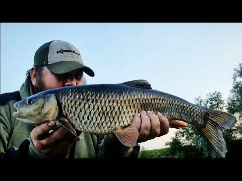 RIVER RIBBLE BARBEL AND CHUB FISHING