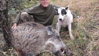 Video Wild boar (Sanglier attila) hunting (Chasse) / Ibex in Tajikistan by Seladang download MP3, 3GP, MP4, WEBM, AVI, FLV Agustus 2018