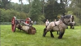 Repeat youtube video THE STRONGEST Draft Horse