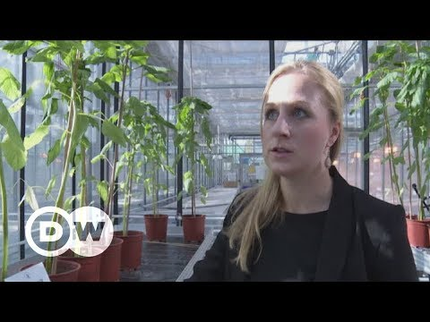 Finding superfoods in traditional veggies | DW English