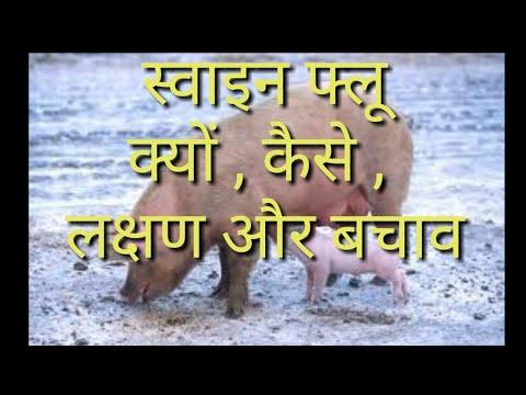 Swine flu / स्वाइन फ्लू / H1N1।