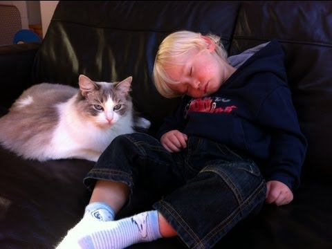 Ragdoll cat thinks she is mother and cared for our little sleeping child!