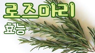 [Rosemary] 로즈마리 효능 두통에 효과 l 모카…