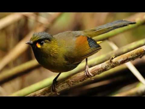 Птицы - яркое фото - foto