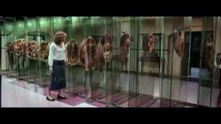 Cell, The [2000] | Split Horse