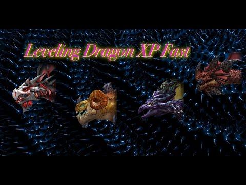 Leveling Dragon XP Fast