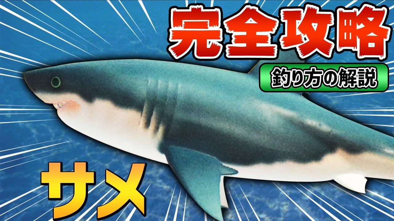 サメ の 釣り あ 方 つもり