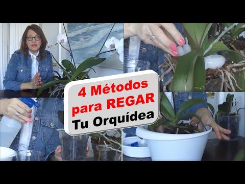 como regar orquideas