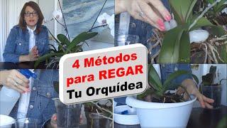 Cómo regar las orquídeas Phalaenopsis