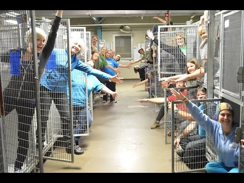 KC Pet Project 2015 - A Year of Lifesaving