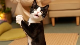 Смешное видео про котов и кошек. Funny cats video. Самые смешные коты и кошки.