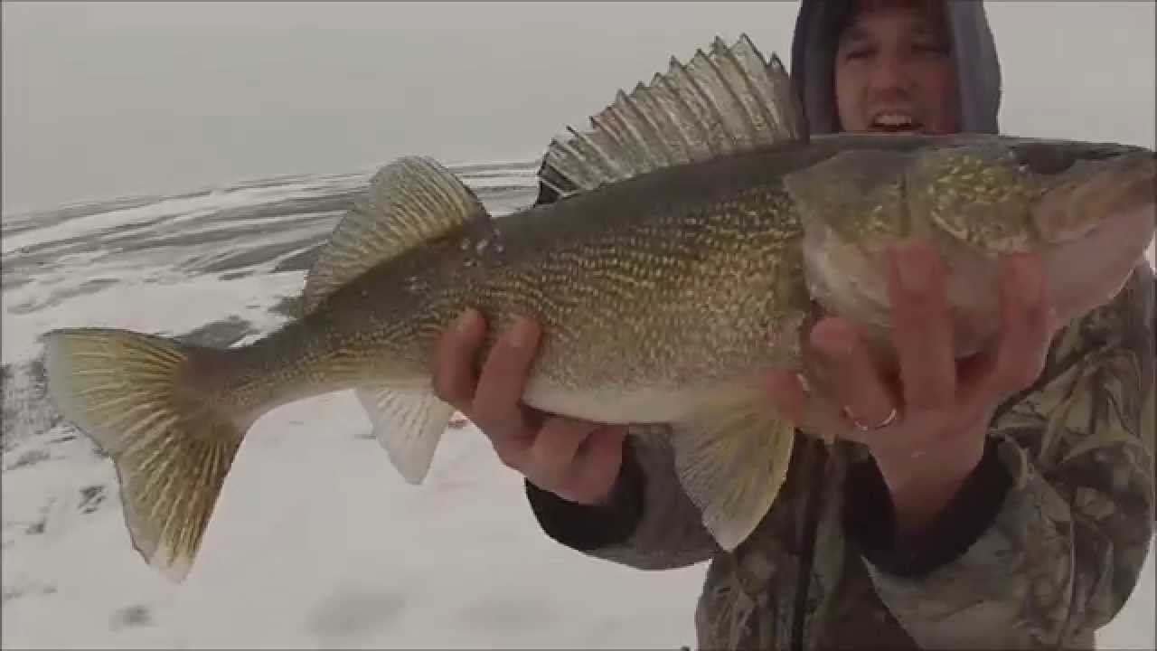 Giant mille lacs walleye while ice fishing youtube for Mille lacs ice fishing