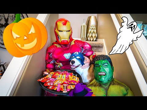 Superheroes go trick or treating with Chloe the dog. HALLOWEEN SPECIAL