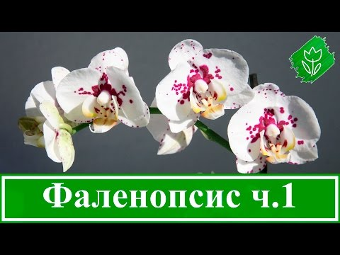Сеть свадебных салонов Белая Орхидея