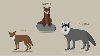 Sequencing Reveals Mixed Ancestry for Wolves