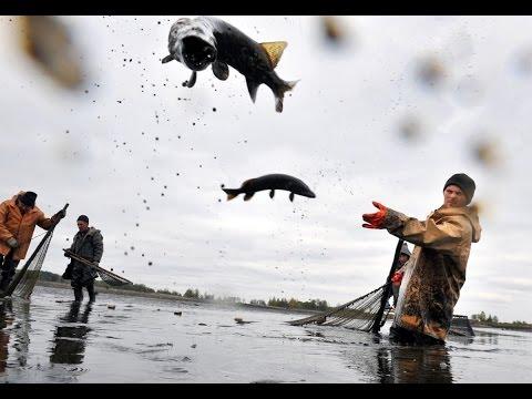 Что происходит с выловом рыбы в Азовском море