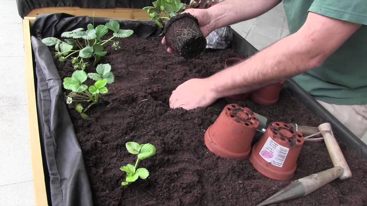 C mo cultivar en mesas de cultivo 1 parte huertos for Mesa de cultivo casera