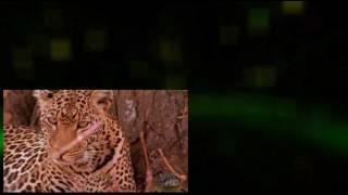 Leopard Documentary -The Leopard Son Full Documentary