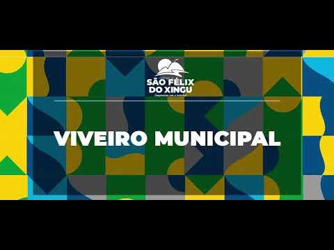 Viveiro municipal de São Félix do Xingu é contemplado com doação de 10 mil tubetes.